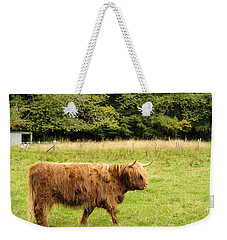 Weekender Tote Bag featuring the photograph Wandering Coo by Christi Kraft