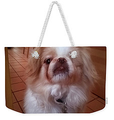 Weekender Tote Bag featuring the photograph Wasabi The Wonder Dog by Roger Bester