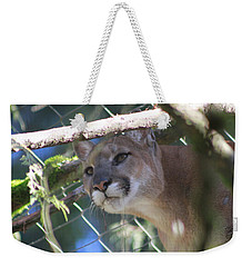 Weekender Tote Bag featuring the photograph Watchful Eyes by Laddie Halupa
