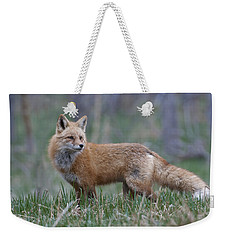 Weekender Tote Bag featuring the photograph Watchful by Gary Lengyel
