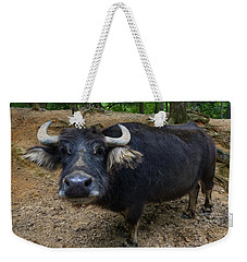 Water Buffalo On Dry Land Weekender Tote Bag by Chris Flees