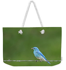 Weekender Tote Bag featuring the photograph Western Bluebird by Brenda Jacobs