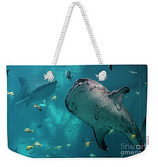 Weekender Tote Bag featuring the photograph Whale-sharks by Barbara Bowen