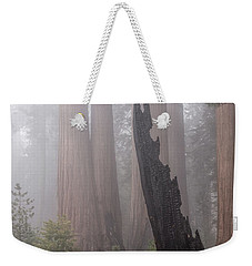 Weekender Tote Bag featuring the photograph What Lurks In The Forest by Peggy Hughes