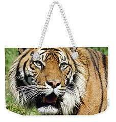 Weekender Tote Bag featuring the photograph Whiskers  by Steve Taylor
