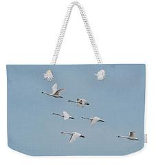 Whistling Swan In Flight Weekender Tote Bag