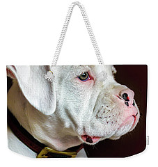 White Boxer Portrait Weekender Tote Bag by Dawn Romine