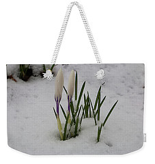 White Crocus In Snow Weekender Tote Bag