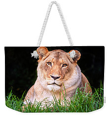 Weekender Tote Bag featuring the photograph White Lion by Alexey Stiop