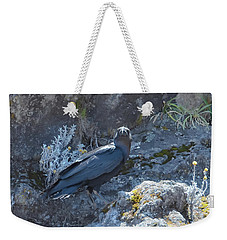 White-necked Raven With Kilimanjaro Flowers  Weekender Tote Bag by Jeff at JSJ Photography