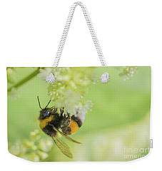 White-tailed Bumblebee - Bombus Lucorum Weekender Tote Bag by Jivko Nakev