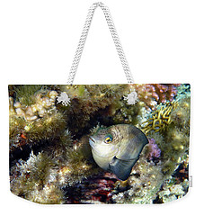 Whiteband Damsel Macro Photography Weekender Tote Bag