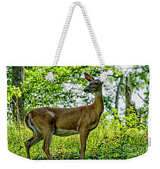 Weekender Tote Bag featuring the photograph Whitetail Deer  by Thomas R Fletcher
