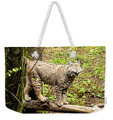 Wild Bobcat In Mountain Setting Weekender Tote Bag by Teri Virbickis