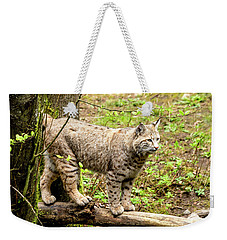 Wild Bobcat Weekender Tote Bag by Teri Virbickis