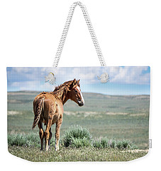 Wild Mustang Colt Of Sand Wash Basin Weekender Tote Bag