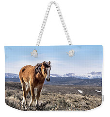 Wild Mustang Filly Of Sand Wash Basin Weekender Tote Bag