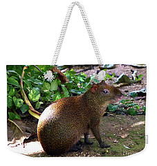 Weekender Tote Bag featuring the photograph Wild Rodent  by Francesca Mackenney