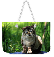 Weekender Tote Bag featuring the photograph Wild Siamese by Chriss Pagani