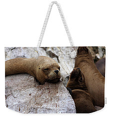 Weekender Tote Bag featuring the photograph Wildlife Of The Ballestas Islands by Aidan Moran