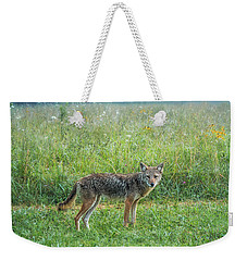 Weekender Tote Bag featuring the photograph Wiley by Jessica Brawley