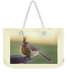 Weekender Tote Bag featuring the photograph Wind Blown Cardinal  by Terry DeLuco