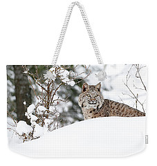 Winter Bobcat Weekender Tote Bag by Steve McKinzie