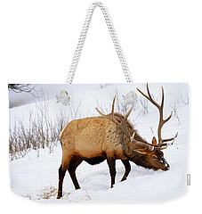 Weekender Tote Bag featuring the photograph Winter Bull by Greg Norrell