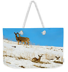 Weekender Tote Bag featuring the photograph Winter Deer by Mike Dawson