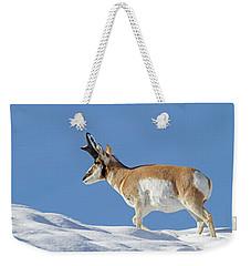 Winter Pronghorn Buck Weekender Tote Bag