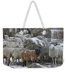 Wintering Sheep Weekender Tote Bag