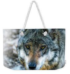 Wolf Gaze Weekender Tote Bag by Elaine Malott