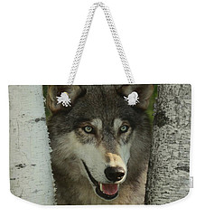 Wolf In The Birch Trees Weekender Tote Bag by Myrna Bradshaw