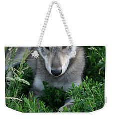 Wolf Pup Portrait Weekender Tote Bag by Shari Jardina