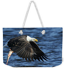 Weekender Tote Bag featuring the photograph Working Hard For Dinner by Coby Cooper