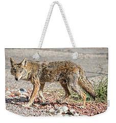 Weekender Tote Bag featuring the photograph Worn Down Coyote by Dan McManus