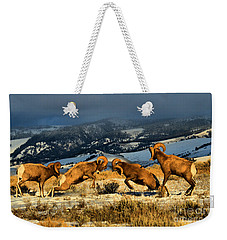 Wyoming Bighorn Brawl Weekender Tote Bag
