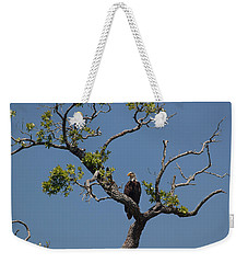 Weekender Tote Bag featuring the photograph Yawkey Wildlife Reguge - American Bald Eagle by Suzanne Gaff