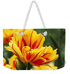 Weekender Tote Bag featuring the photograph Yellow And Red Triumph Tulips by Rona Black