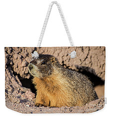 Yellow-bellied Marmot - Capitol Reef National Park Weekender Tote Bag by Gary Whitton