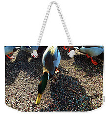 Weekender Tote Bag featuring the photograph yellow Billed Duck Feeding by Roger Bester
