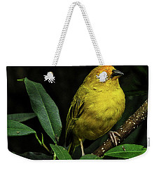 Weekender Tote Bag featuring the photograph Yellow Bird by Pradeep Raja Prints