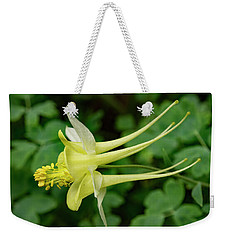 Weekender Tote Bag featuring the photograph Yellow Columbine Profile by Jean Noren
