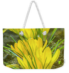 Yellow Crocuses Close Up Weekender Tote Bag