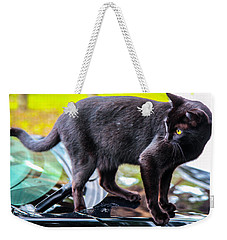 Weekender Tote Bag featuring the photograph Yellow Eyed Cat by Madeline Ellis