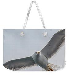 Weekender Tote Bag featuring the photograph Yellow-legged Gull - Larus Michahellis by Jivko Nakev