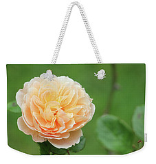 Weekender Tote Bag featuring the photograph Yellow Rose In December by Kelly Hazel