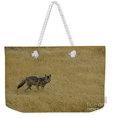 Weekender Tote Bag featuring the photograph Yellowstone Coyote by Sue Smith