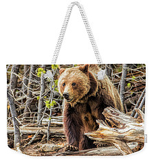 Weekender Tote Bag featuring the painting Yellowstone Grizzly Bear by Christopher Arndt