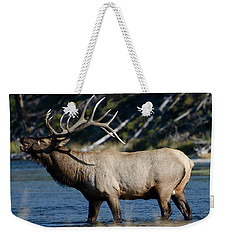 Yellowstone Park Elk Weekender Tote Bag by Greg Sigrist